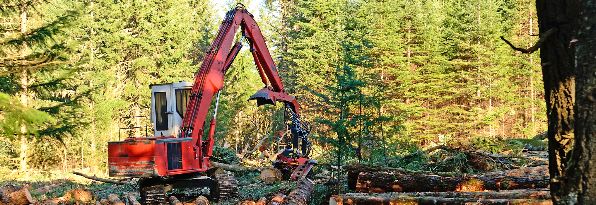 Forestry and Logging home